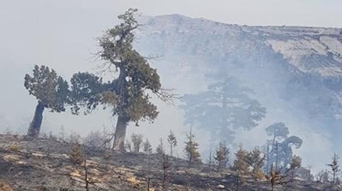 Mersin'de orman yangını!