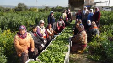 Kadınlar Günü'nü tarlada çalışarak kutladılar