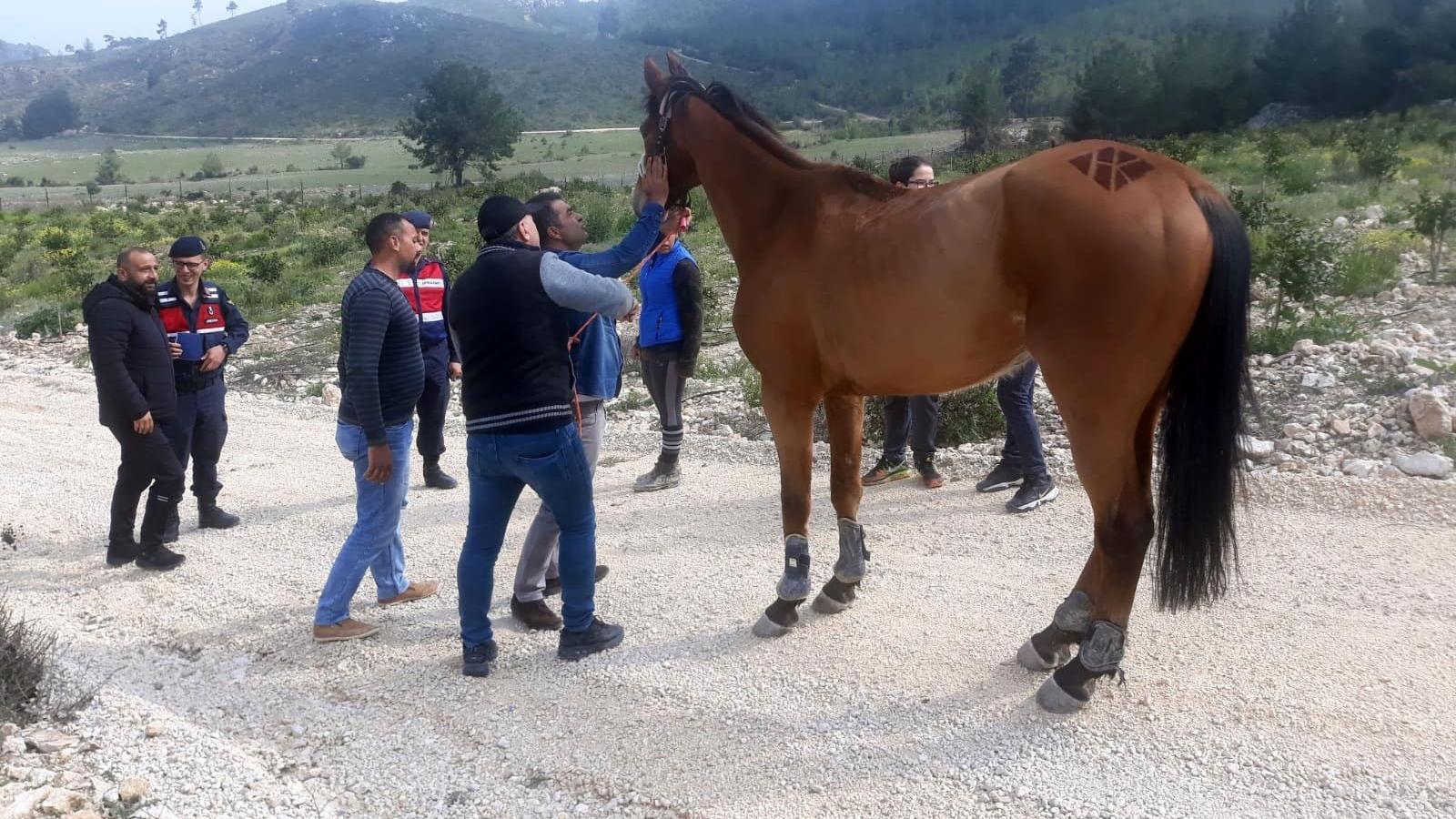Kaybolan 100 bin liralık at bulundu