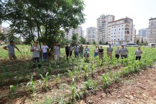 'Kent içi tarım projesi' başarıyla sürüyor