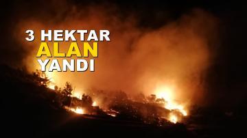 Aydıncık'ta orman yangını