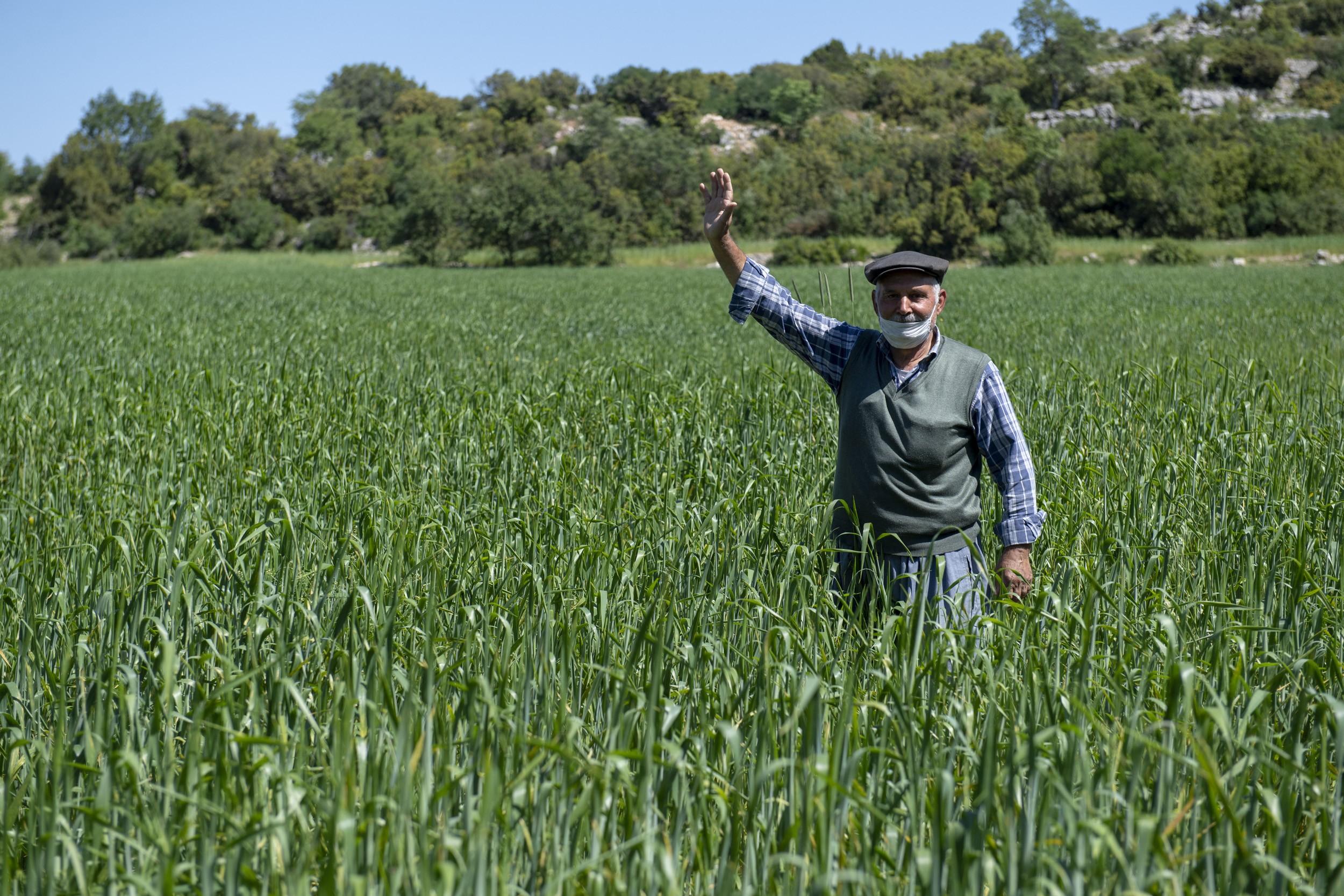 Mersin'de yerli buğday üretimi teşvik ediliyor