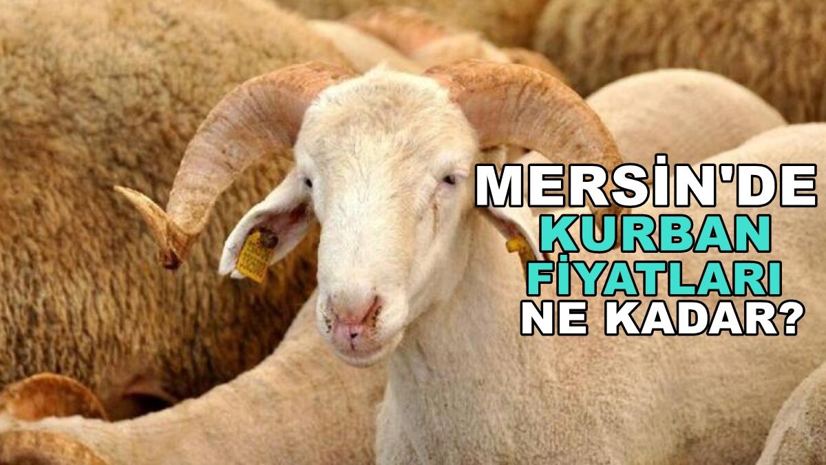 Mersin'de kurbanlık fiyatları belli oldu