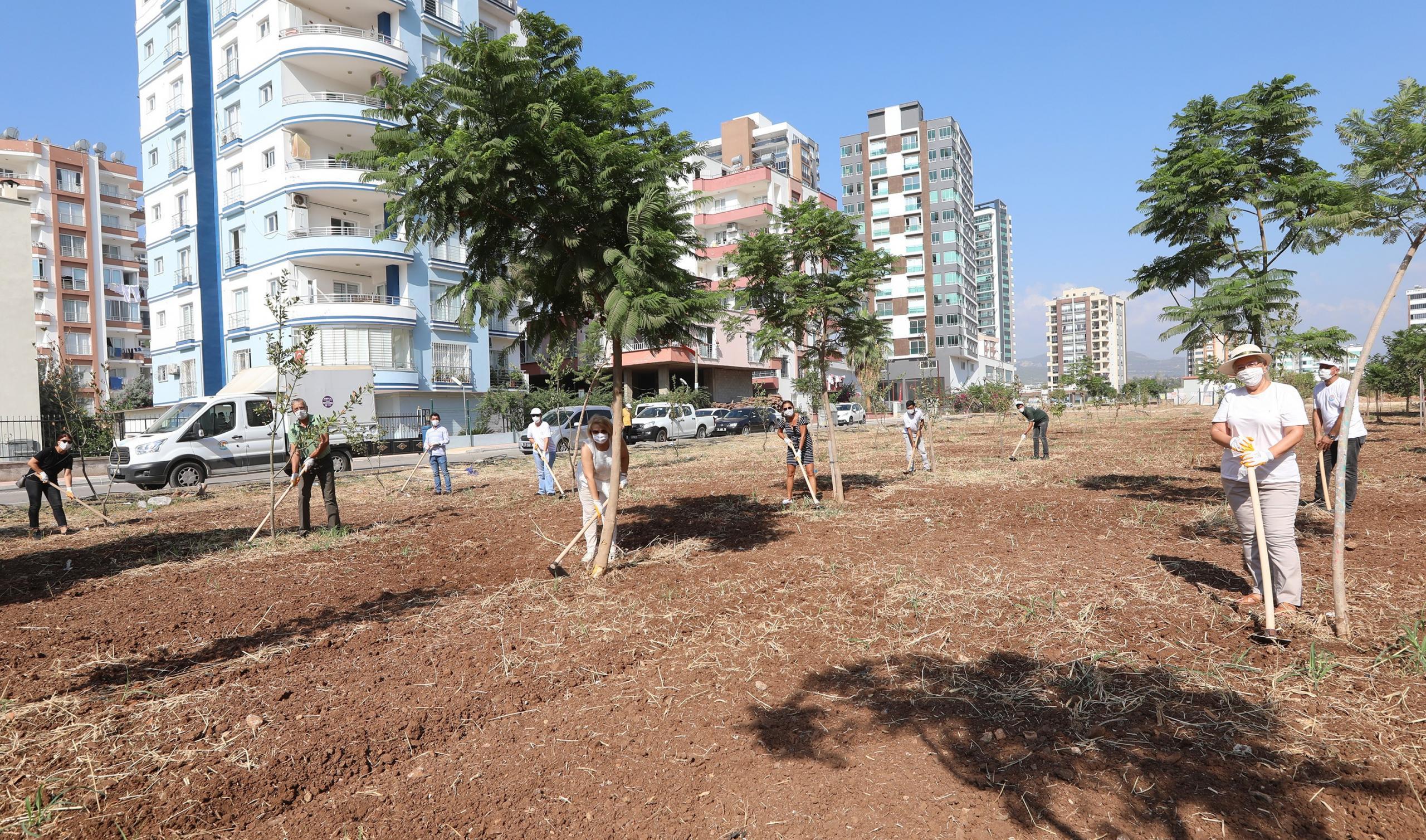 Mezitli'de ağaçlara bakım yapıldı