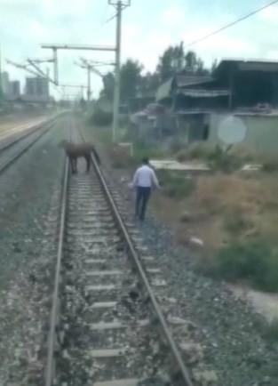 Ölüme terk edilen atı makinistler kurtardı